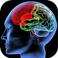 amyloids, CFS and the brain