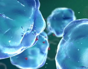 Short video explaining the immune response.