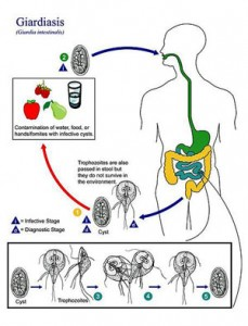 Giardia_lamblia_causes_ME/CFS-in_some_individuals