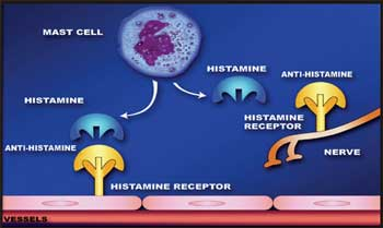 Antihistamine1