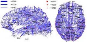 Brain connectivity Wiki