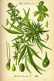 Cannabanoids - More effective in fibromyalgia and CFS than opioids?