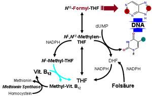 Folicacid B12