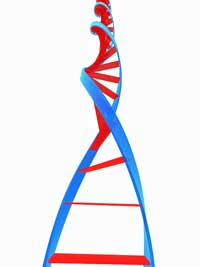 High genetic risk for fibromyalgia and chronic fatigue syndrome
