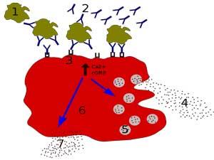 Mast cells cfs fibromyalgia
