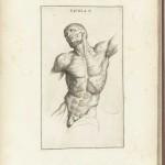 Muscles Genga 1