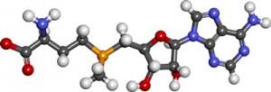 S adenosylmethionine1