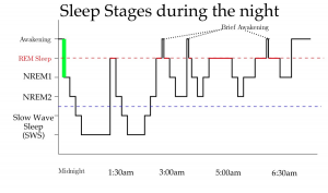 Diagram of sleep stages during the night