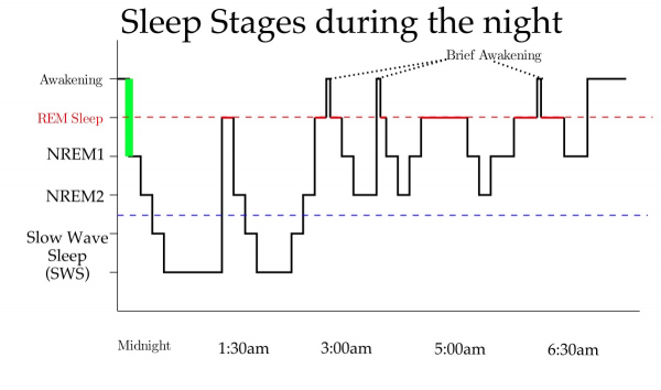 A diagram of sleep stages during the night.