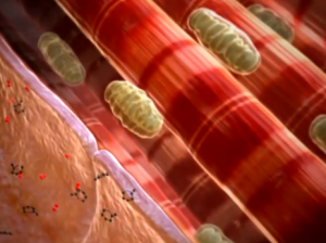 Video explaining the process of cellular respiration.