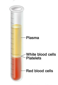 plasma and blood