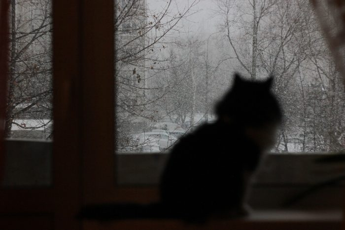 Photo of cat looking out window.