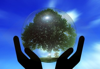 hands holding globe containing tree