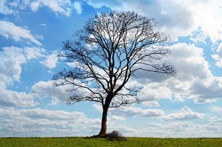 pixabay tree