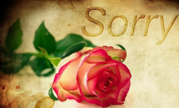 "Image of rose with the word ""Sorry""."