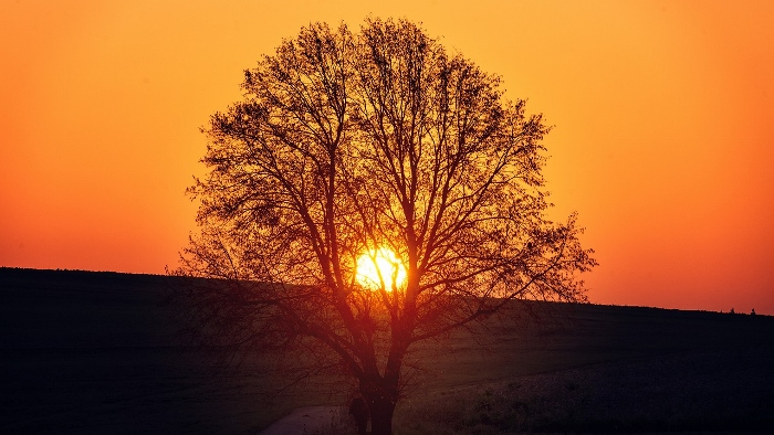 Sunset behind tree.
