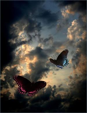 1249-butterflies1.jpg
