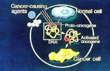 3241 Oncogene.