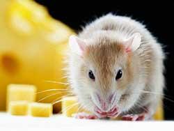 4702-Mouse.jpg