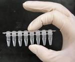 4704-PCR_tubes.png