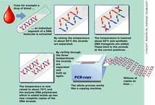 PCR Tests for CFS